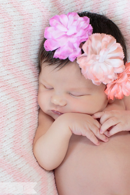 feather + light photography | main line, pa newborn  photographer | pink + white