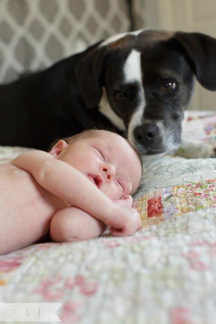 feather + light photography | main line, pa newborn lifestyle photographer |newborn + dog