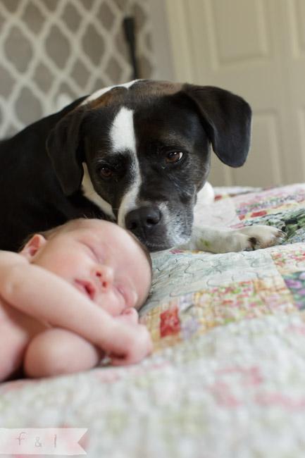 feather + light photography | main line, pa newborn lifestyle photographer | newborn + dog